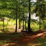 Wald und Natur auf dem Josefstaler Gelände