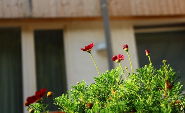 Detailaufnahme, Haus im Hintergrund