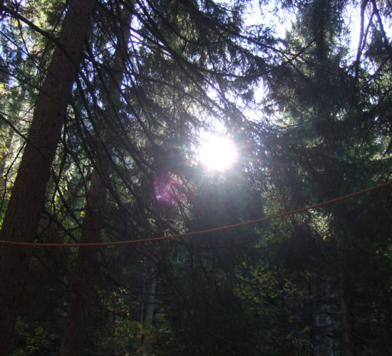 Seil im Wald