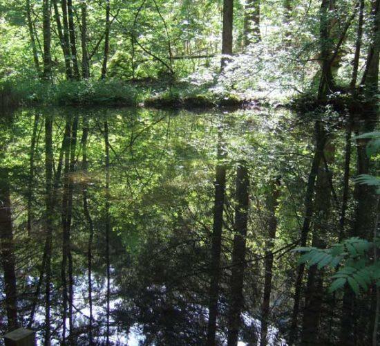 Wald spiegelt sich im Teich