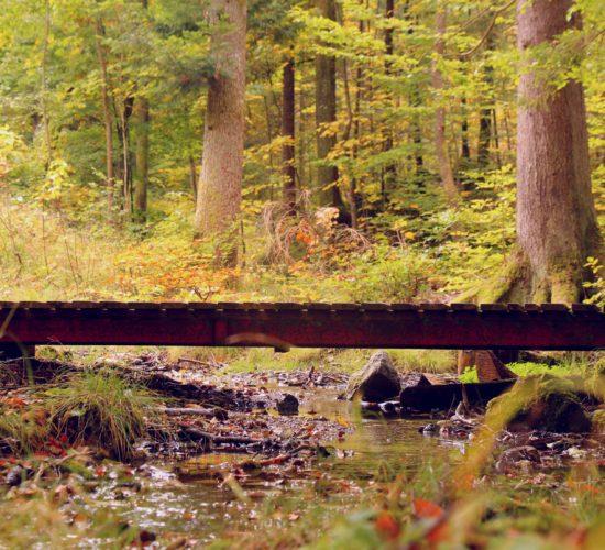 Steg über Bach im Wald